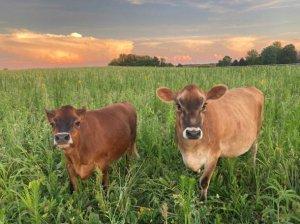 Friendly Livestock (summer 2020) - Silvopasture Farmstead - St. Paul, Indiana - HAUS | Architecture